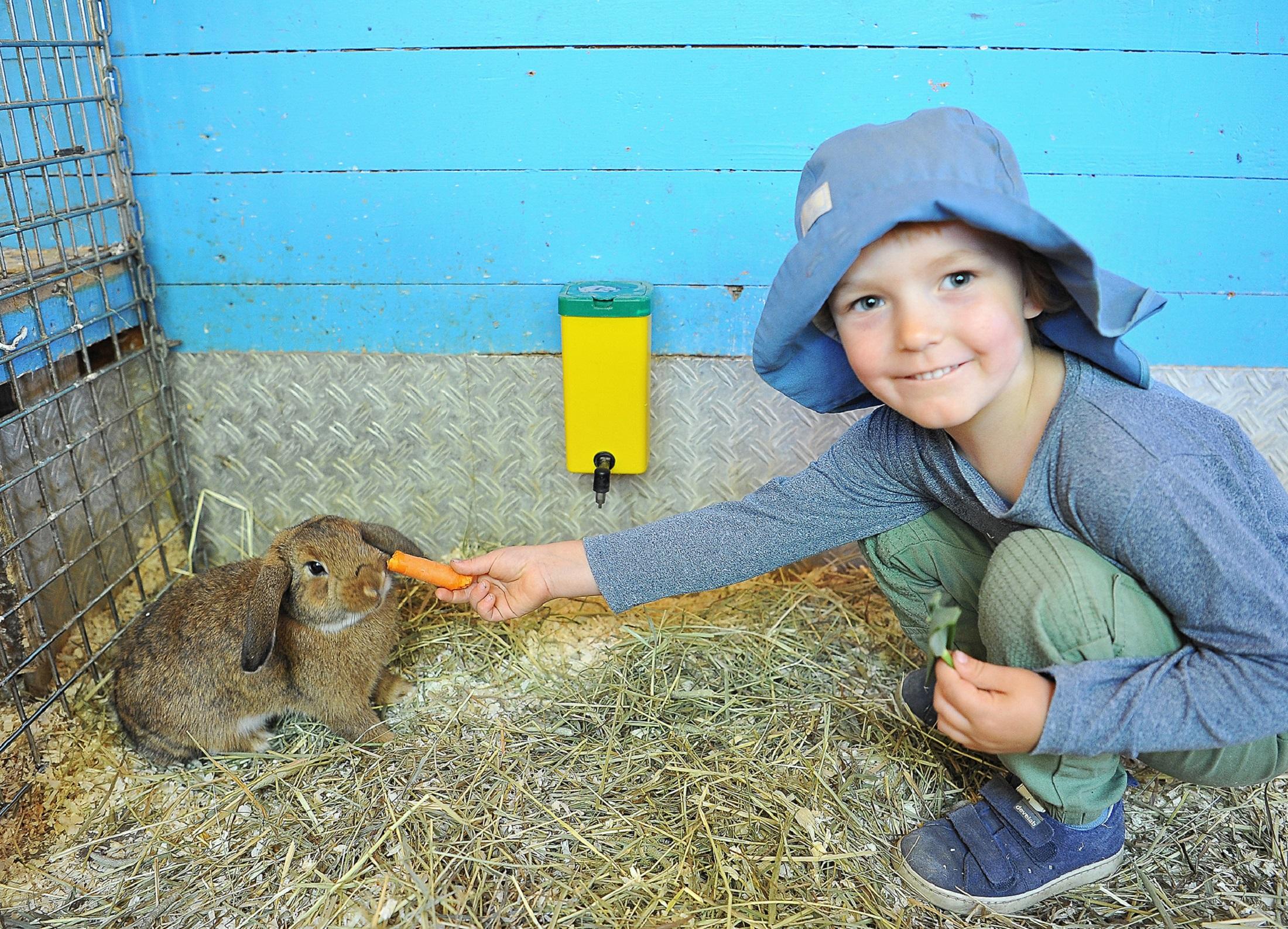 Magst du Möhrchen? Der Ausflug zum Kinderbauernhof in Kirchdorf war ein großer Erfolg